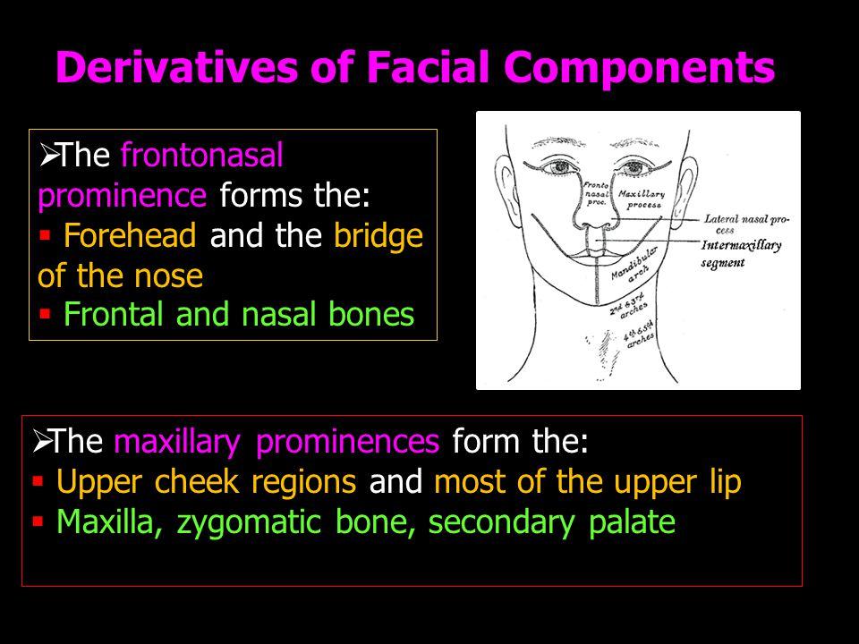 Derivatives of Facial Components