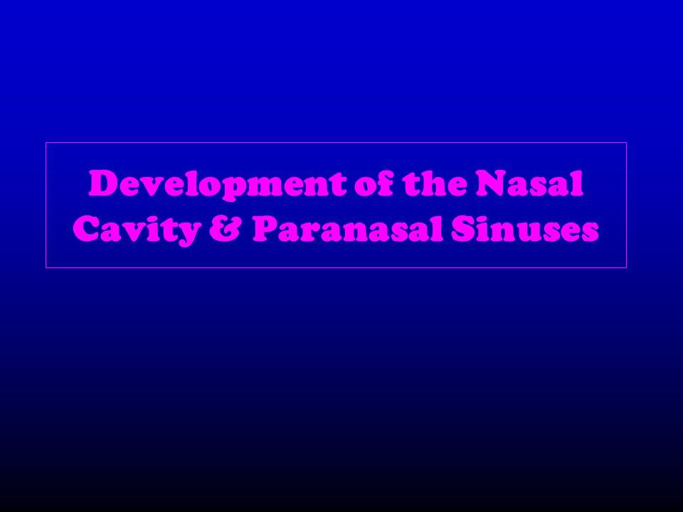 Development of the Nasal Cavity & Paranasal Sinuses