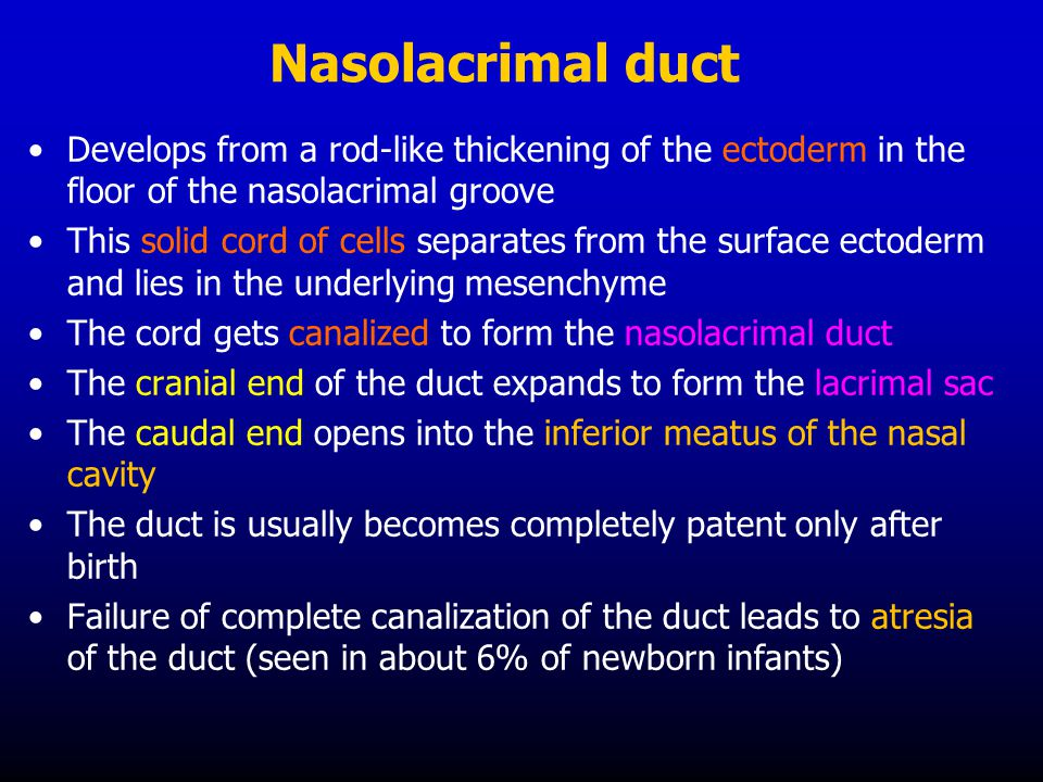 Nasolacrimal duct Develops from a rod-like thickening of the ectoderm in the floor of the nasolacrimal groove.
