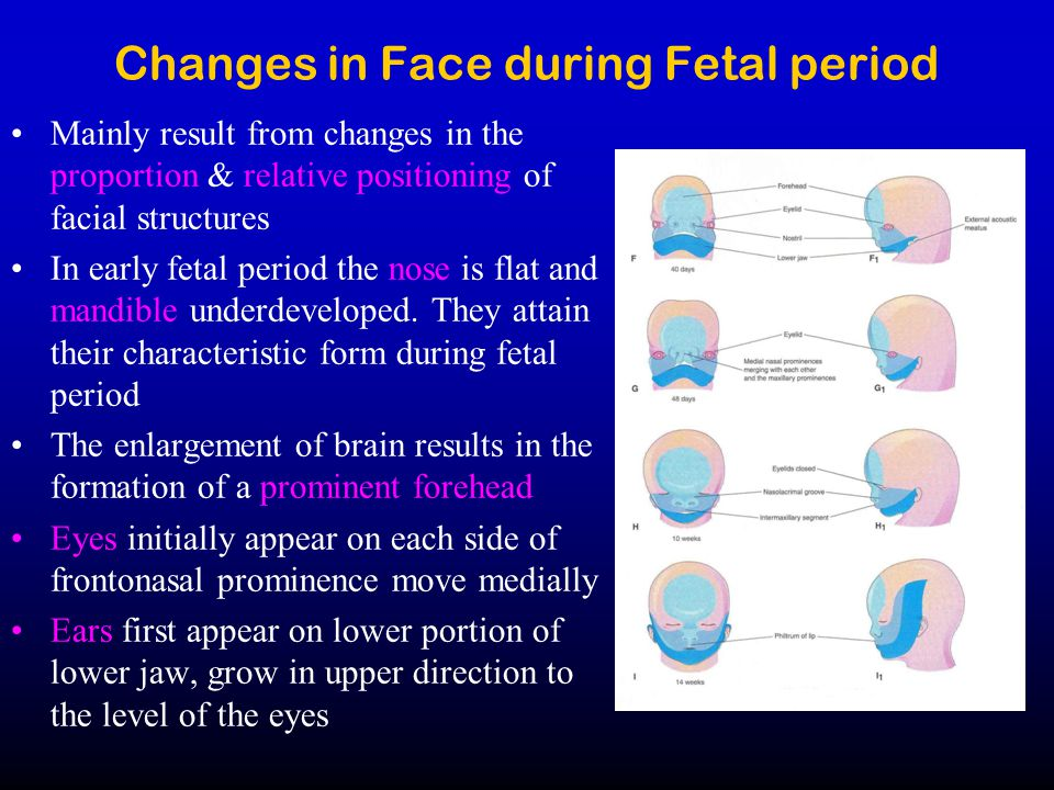 Changes in Face during Fetal period