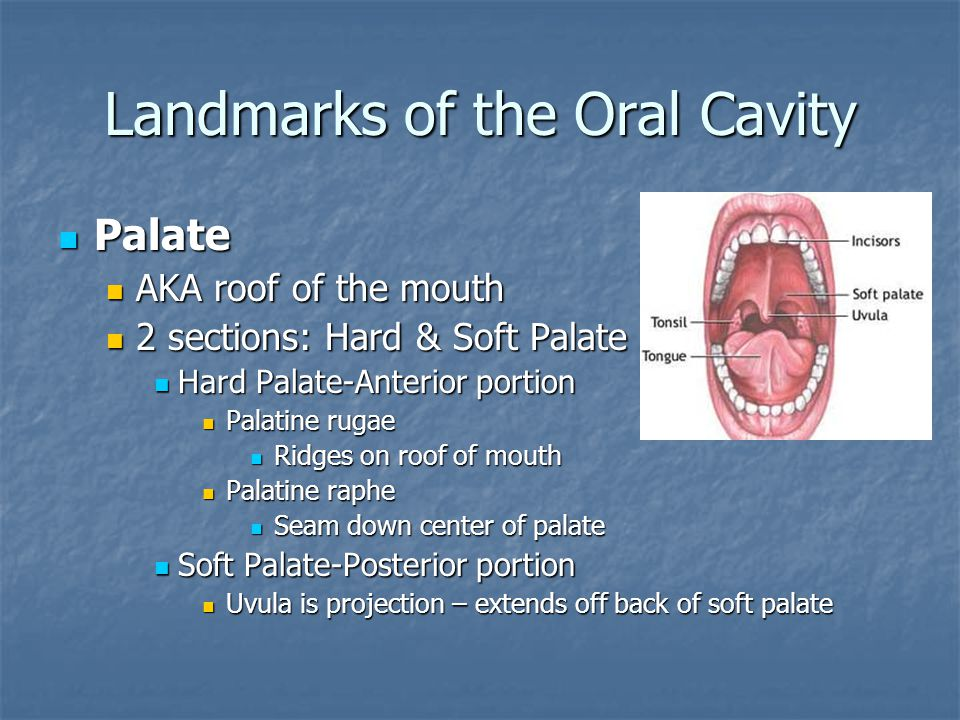 Landmarks of the Oral Cavity