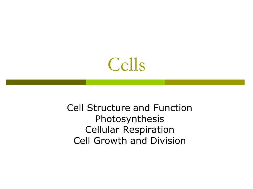 Cells Cell Structure And Function Photosynthesis Cellular Respiration