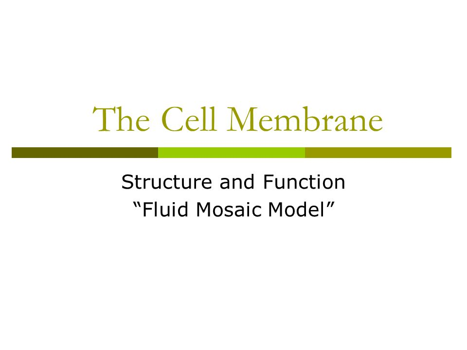 cell membrane and organelle webquest1 Which organelle is the site of photosynthesis _____ b what are the stacks of membranes inside the chloroplast _____ c what is.
