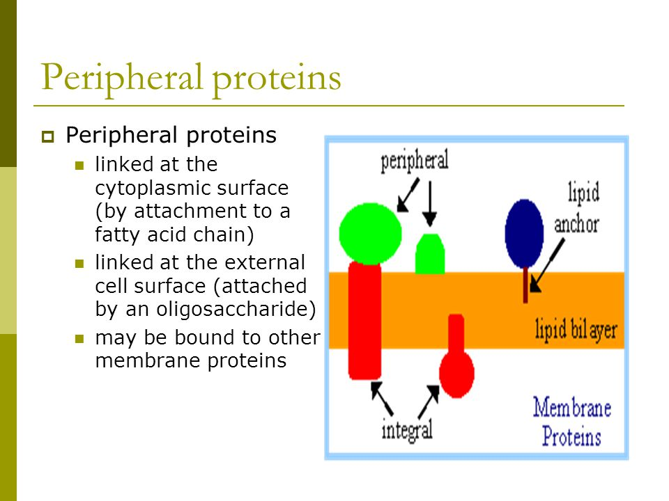 the structure and functions of proteins essay Structures of proteins essay structures of proteins essay 722 words nov 10th,  the structure of proteins essay examples  the functions of proteins introduction protein accounts for.