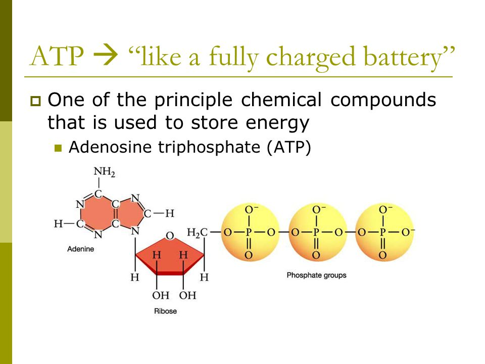 ATP  like a fully charged battery