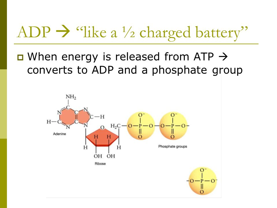 ADP  like a ½ charged battery