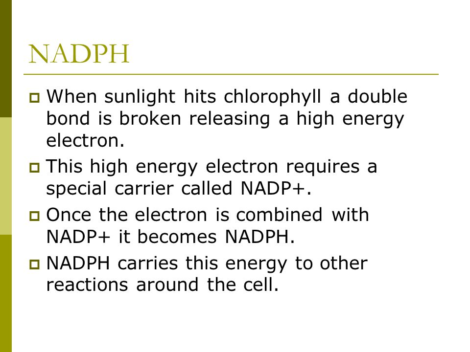 NADPH When sunlight hits chlorophyll a double bond is broken releasing a high energy electron.