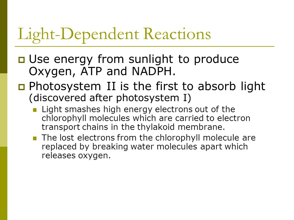 Light-Dependent Reactions