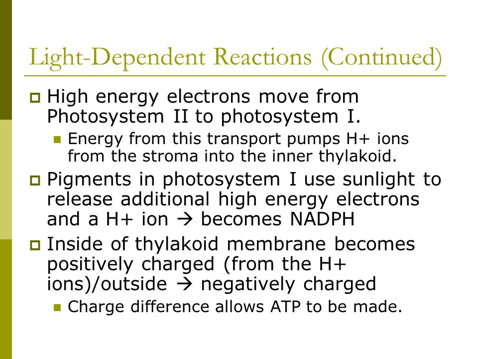Light-Dependent Reactions (Continued)