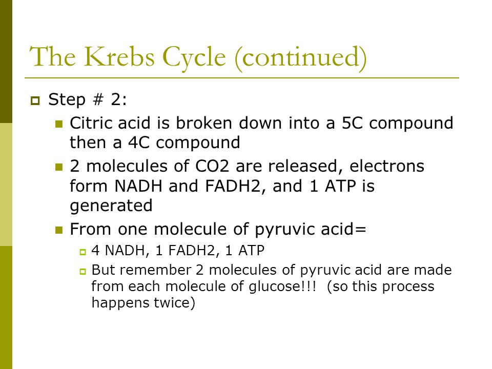 The Krebs Cycle (continued)