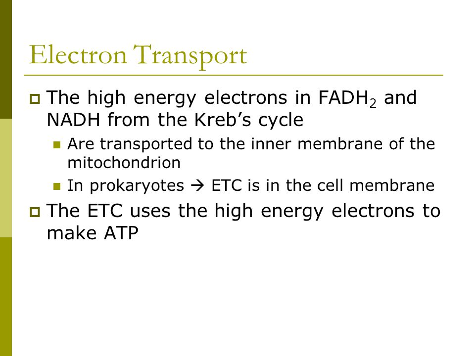 Electron Transport The high energy electrons in FADH2 and NADH from the Kreb's cycle. Are transported to the inner membrane of the mitochondrion.