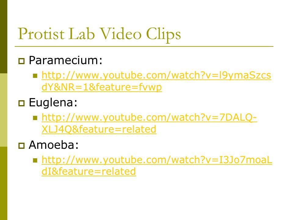 Protist Lab Video Clips