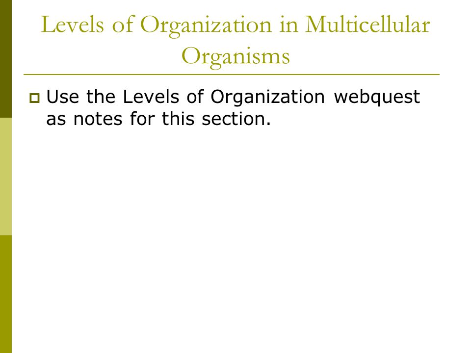 Levels of Organization in Multicellular Organisms