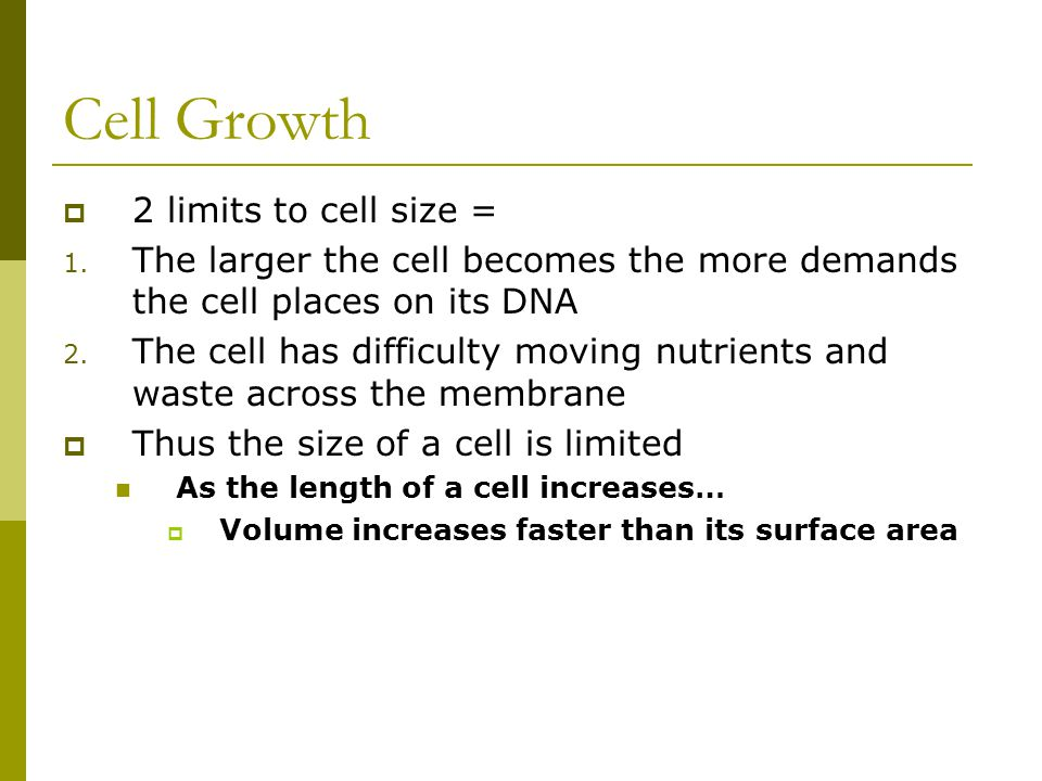 Cell Growth 2 limits to cell size =