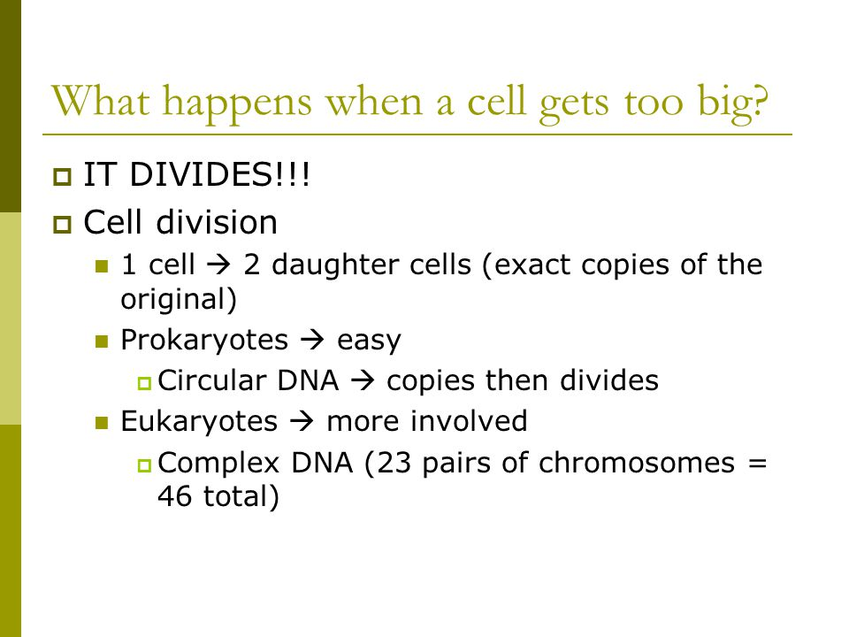 What happens when a cell gets too big
