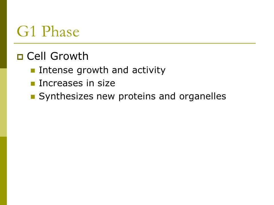 G1 Phase Cell Growth Intense growth and activity Increases in size