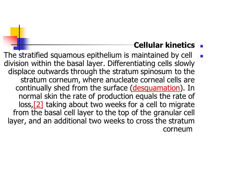 Cellular kinetics