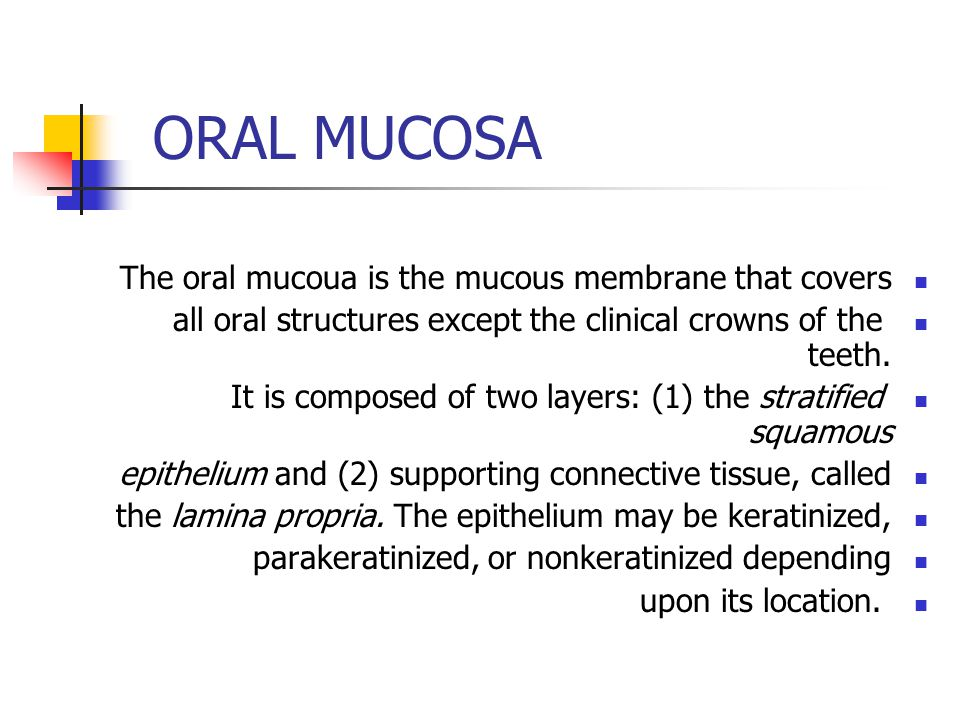 ORAL MUCOSA The oral mucoua is the mucous membrane that covers