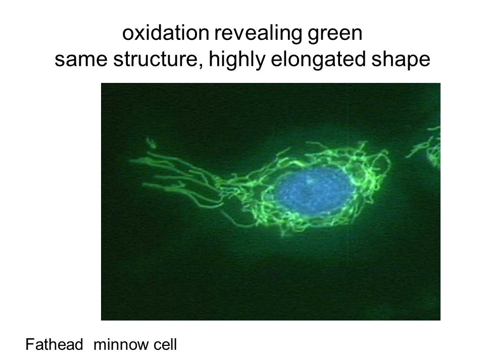 oxidation revealing green same structure, highly elongated shape