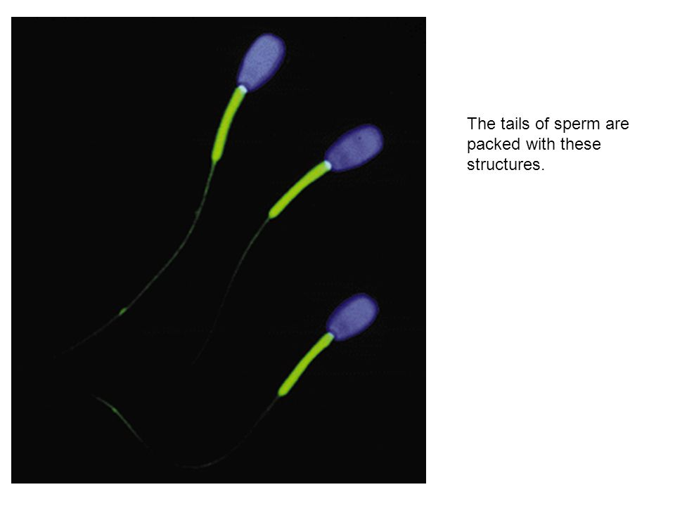 The tails of sperm are packed with these structures.