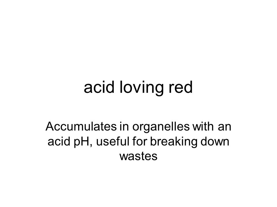 acid loving red Accumulates in organelles with an acid pH, useful for breaking down wastes