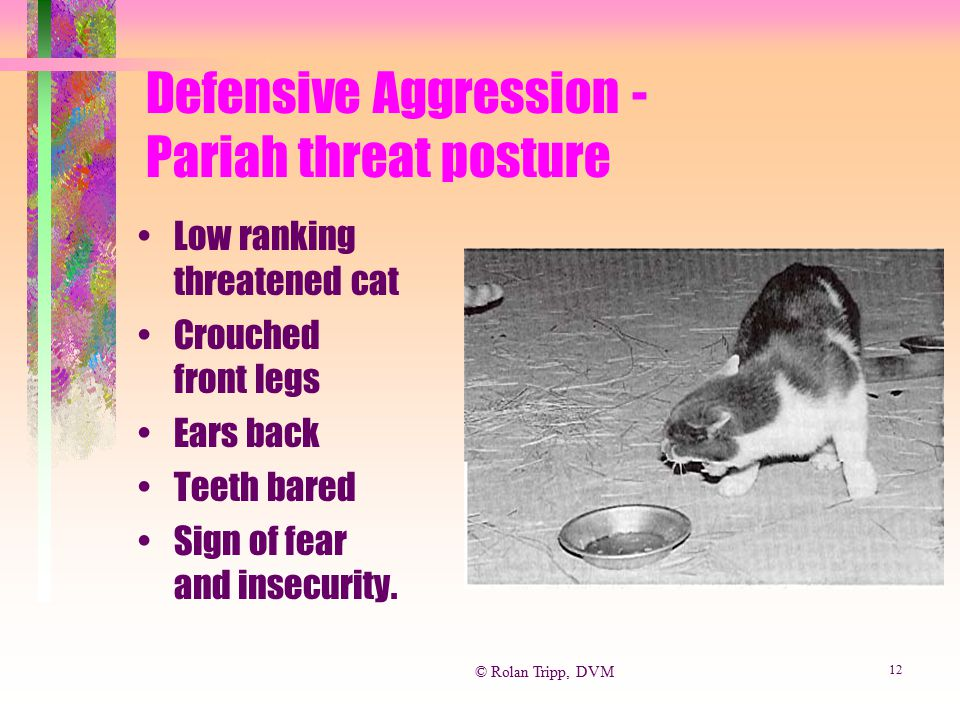 Defensive Aggression - Pariah threat posture