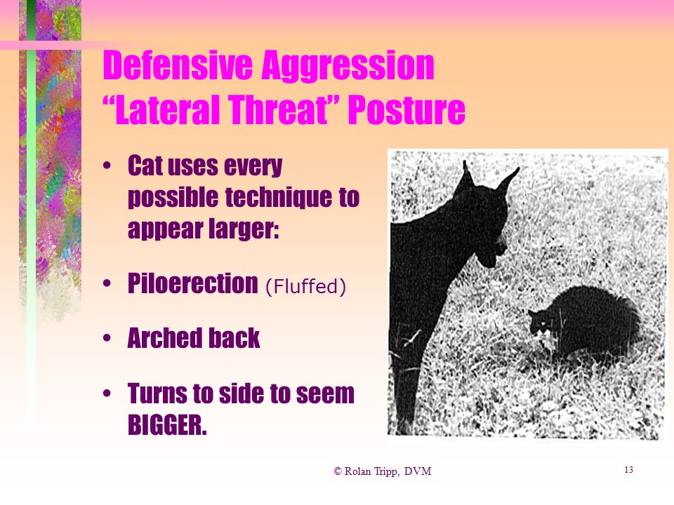 Defensive Aggression Lateral Threat Posture
