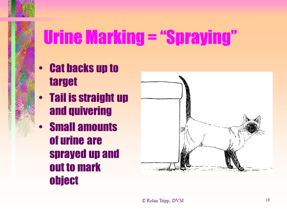 Urine Marking = Spraying
