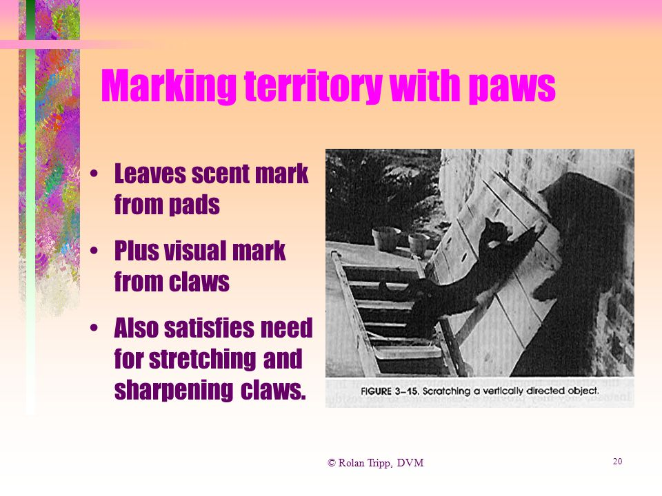 Marking territory with paws