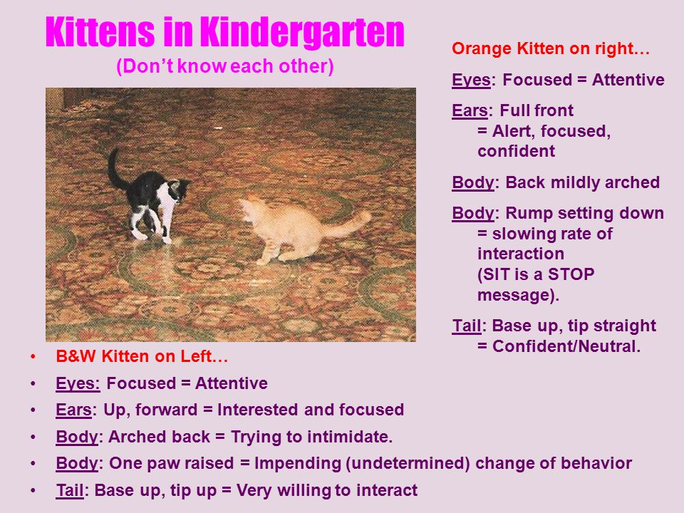 Kittens in Kindergarten (Don't know each other)