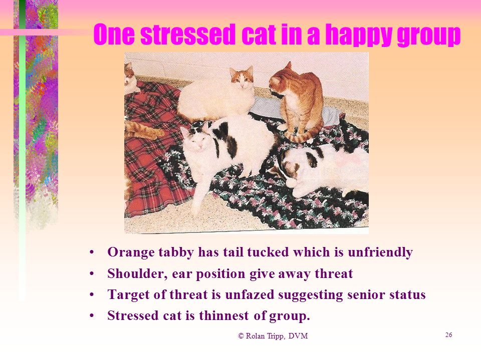 One stressed cat in a happy group