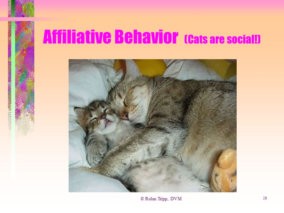 Affiliative Behavior (Cats are social!)