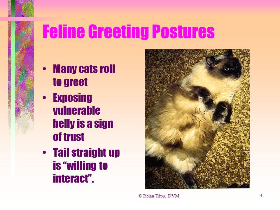 Feline Greeting Postures