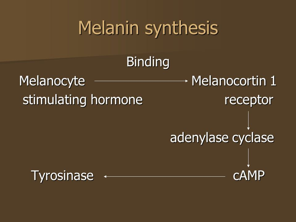 Melanin synthesis Binding Melanocyte Melanocortin 1