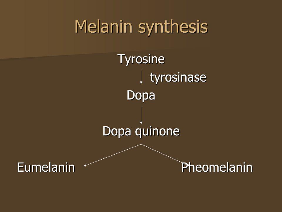 Melanin synthesis Tyrosine tyrosinase Dopa Dopa quinone