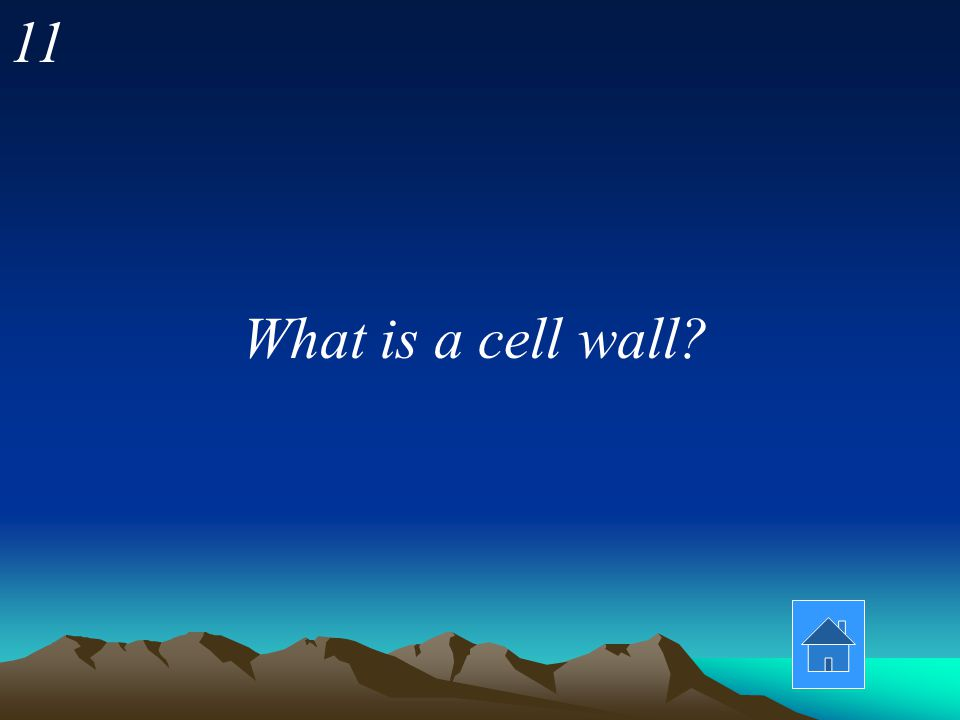 11 What is a cell wall