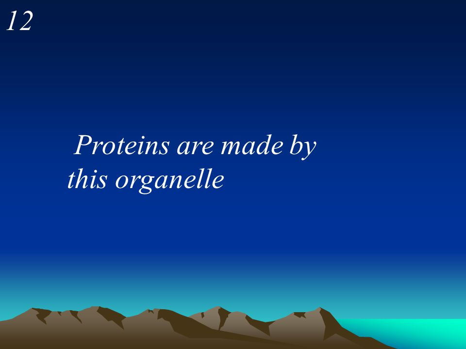 12 Proteins are made by this organelle