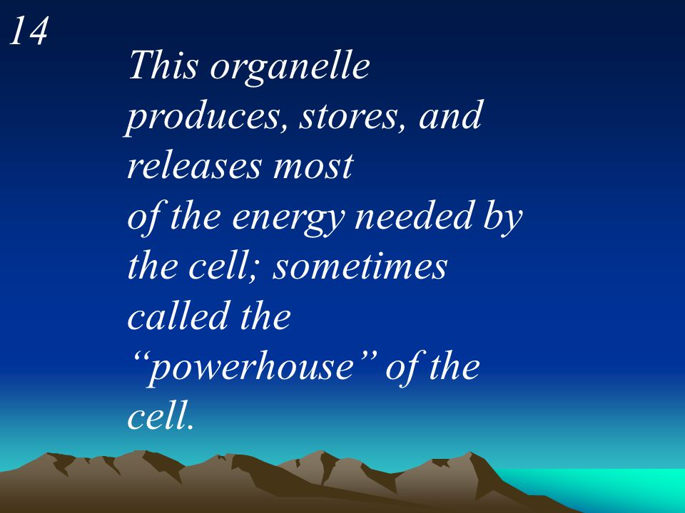 14 This organelle produces, stores, and releases most of the energy needed by the cell; sometimes called the powerhouse of the cell.