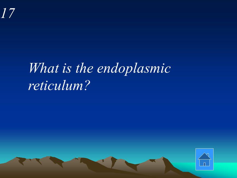 17 What is the endoplasmic reticulum
