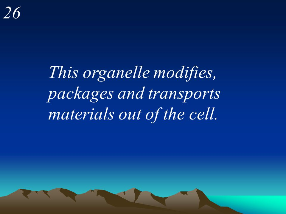26 This organelle modifies, packages and transports materials out of the cell.