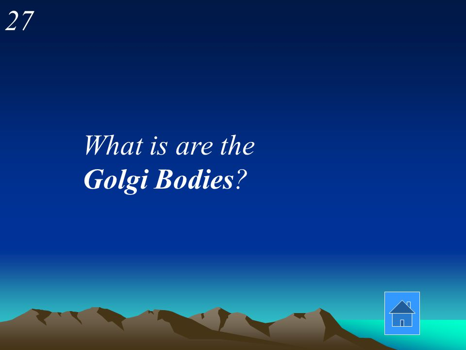 27 What is are the Golgi Bodies