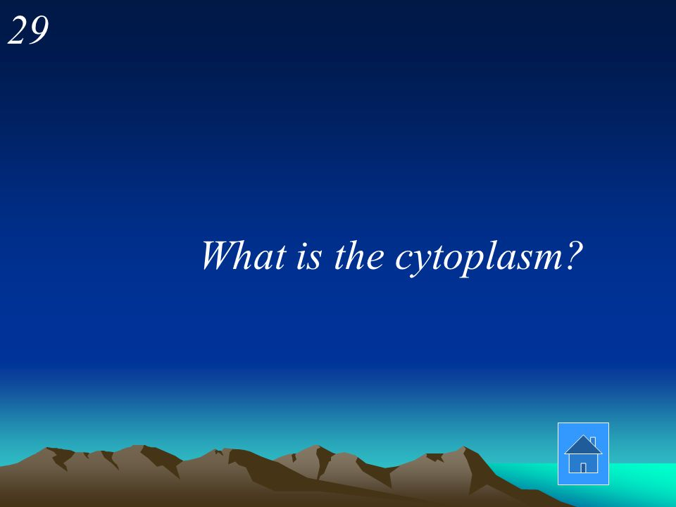 29 What is the cytoplasm