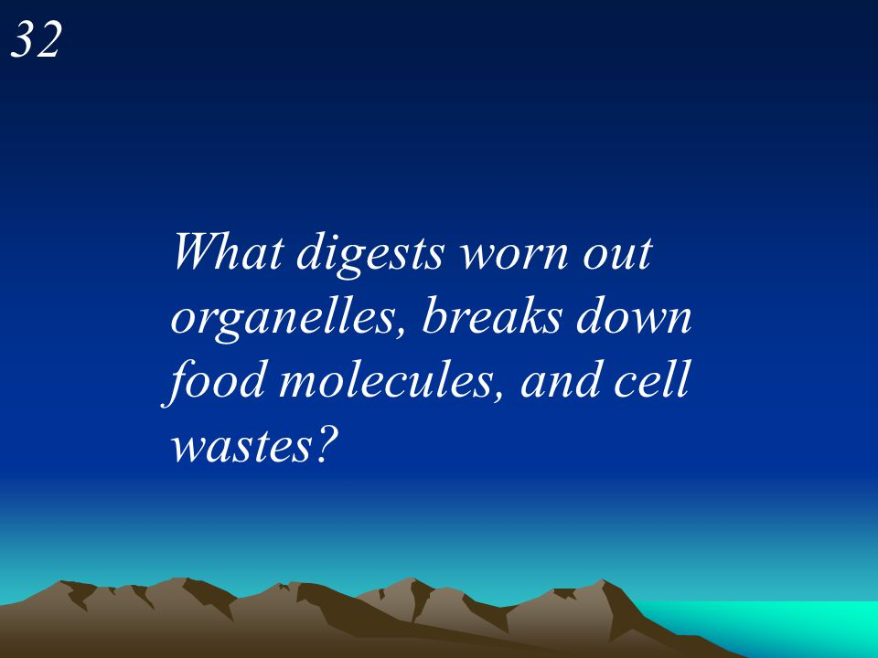 32 What digests worn out organelles, breaks down food molecules, and cell wastes
