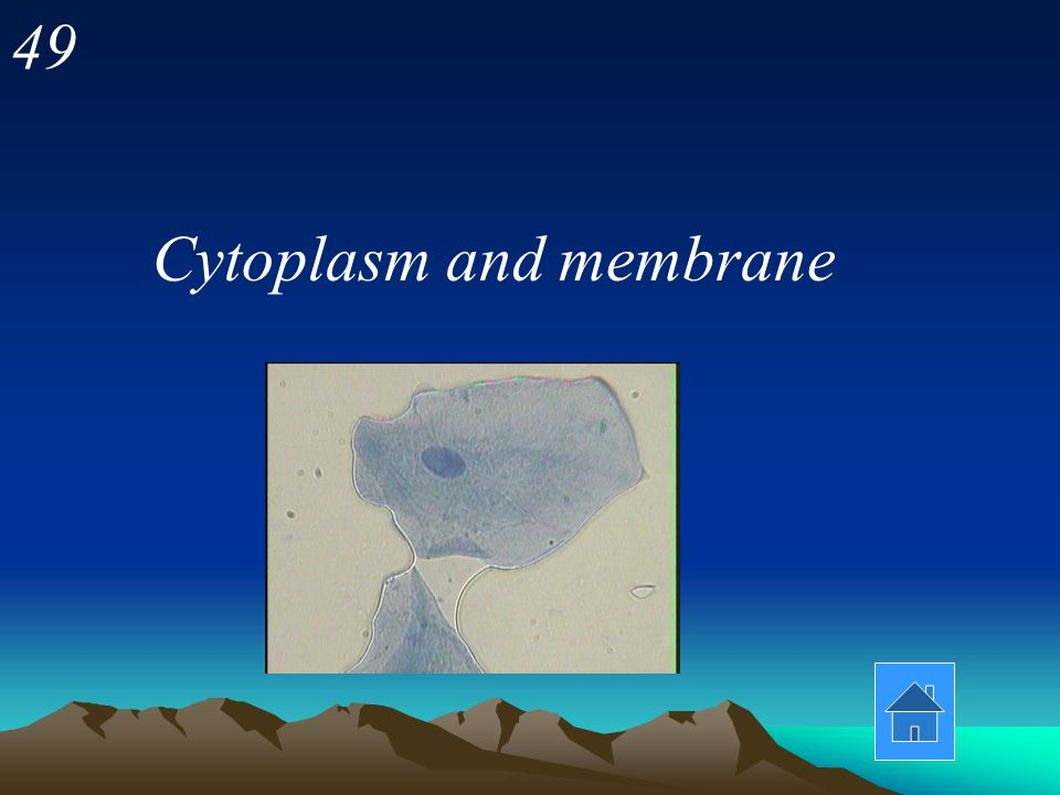 49 Cytoplasm and membrane