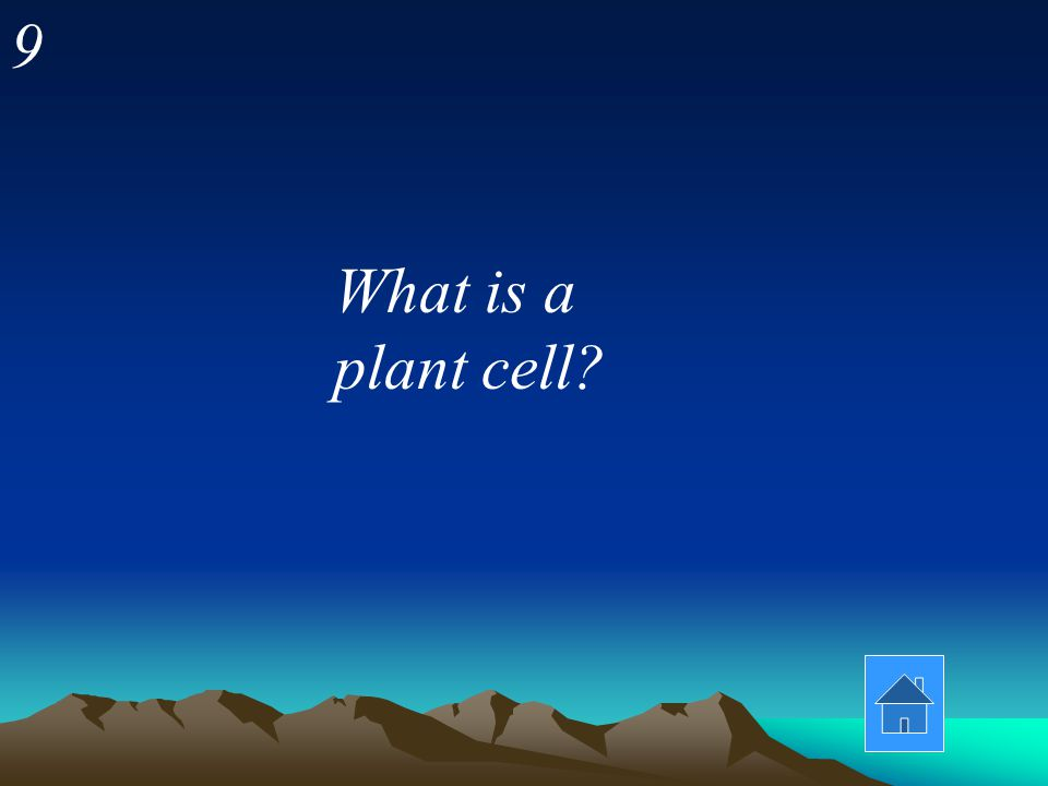9 What is a plant cell