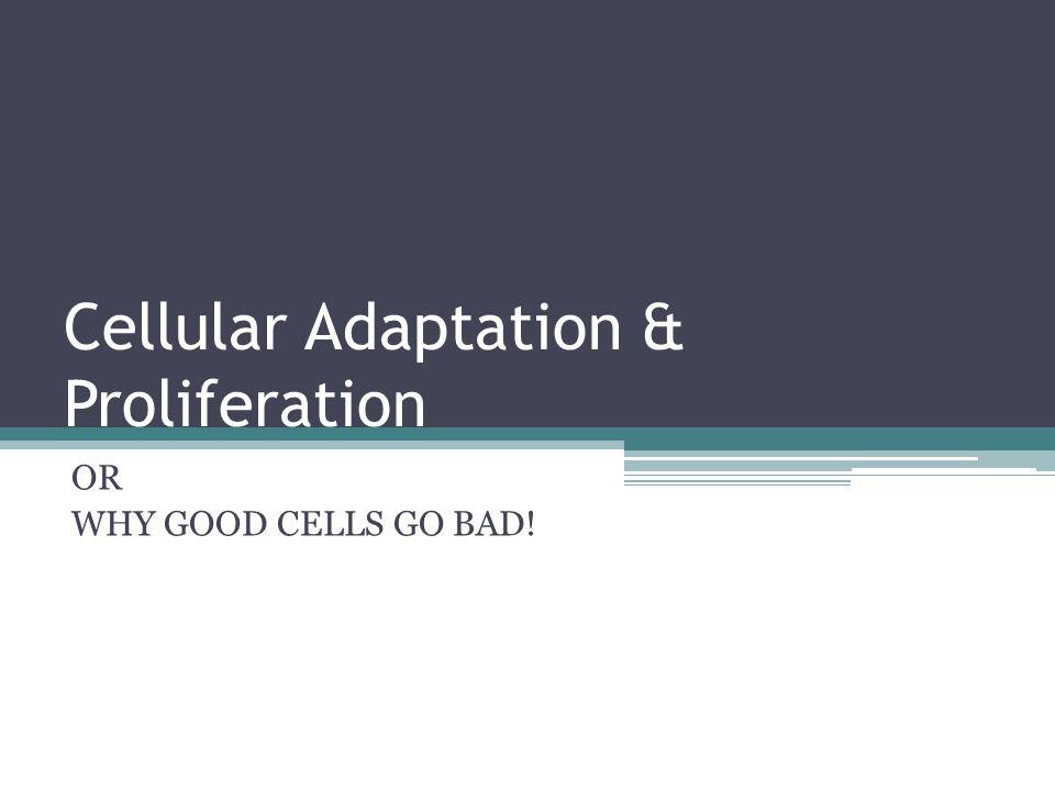 Cellular Adaptation & Proliferation