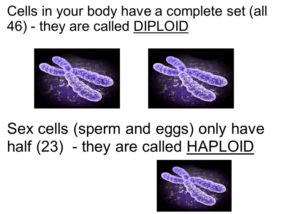 Cells in your body have a complete set (all 46) - they are called DIPLOID