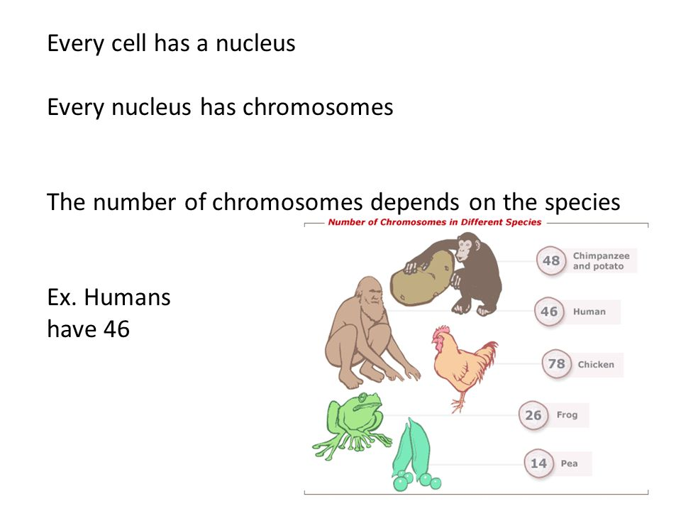 Every cell has a nucleus