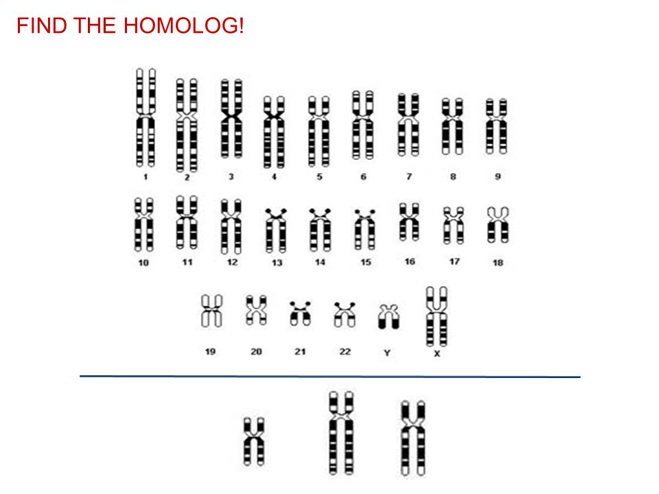 FIND THE HOMOLOG!