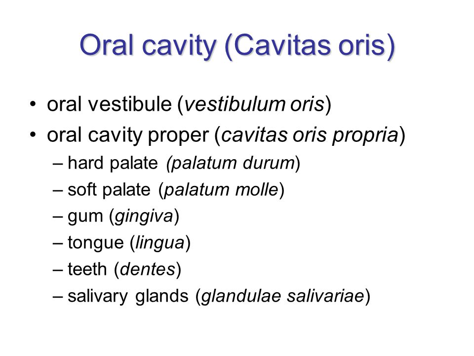 Oral cavity (Cavitas oris)